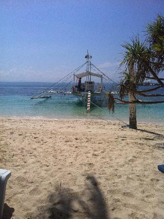 Malapascua Exotic Island Dive & Beach Resort: Barca Diving