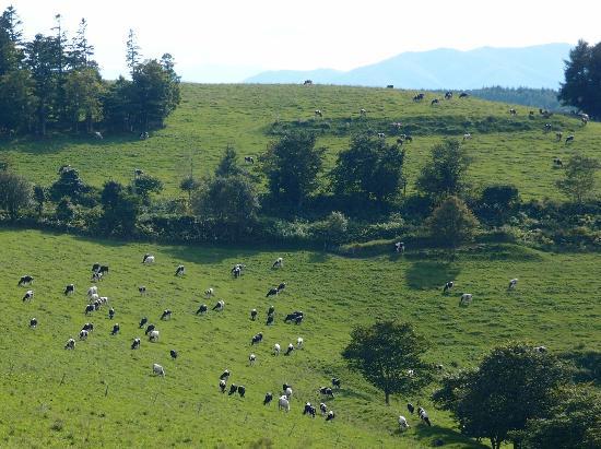 Engaru sun hills park: 見晴らし牧場