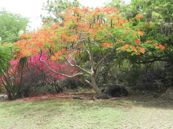 Rosewood Little Dix Bay: Beautiful bright trees