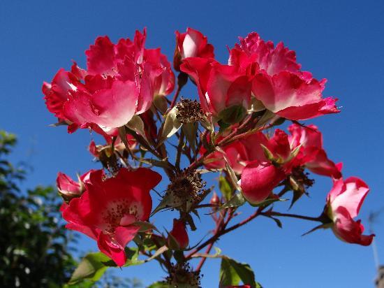 Roc n' Bol : De magnifiques fleurs