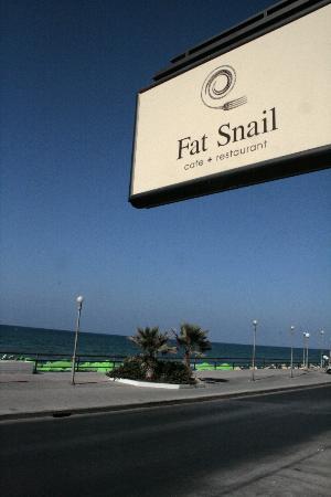 Fat Snail: θαλασσινη θεα