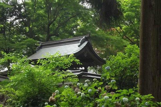 Iwawakidera Temple : 岩湧寺