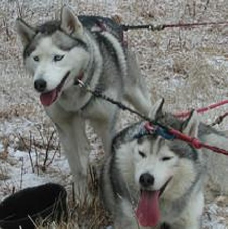 Barking Brook Sled Dog Adventures - Day Trips Photo