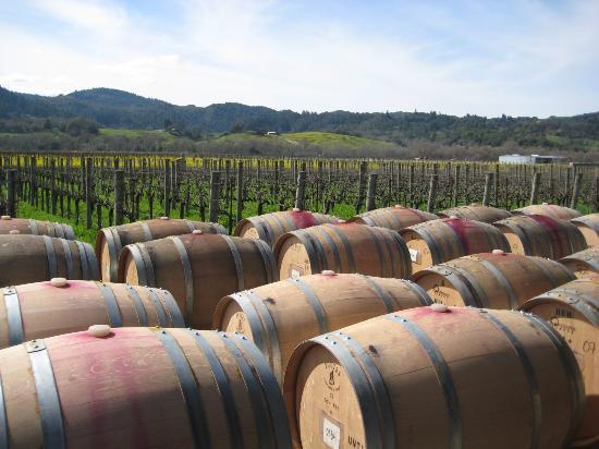 Unti Vineyards Bild