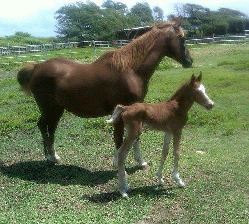 Kahuku-Kai Horse Ranch