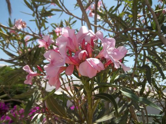Bungalows Garden Beach: flowers