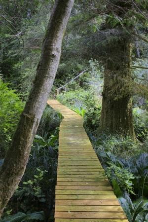The Compass Rose Bed and Breakfast: Boardwalk on one of the trails