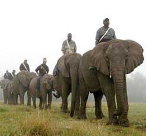 Elephant Sanctuary Hartbeesport Dam
