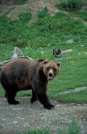 Dolly Varden Alaska - Day Tours