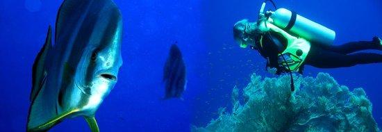 DiveSail Diving Pty Ltd Image