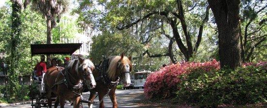 Historic Savannah By Foot