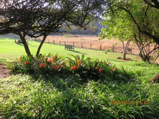 Bakubung Bush Lodge: Looking out to the waterhole