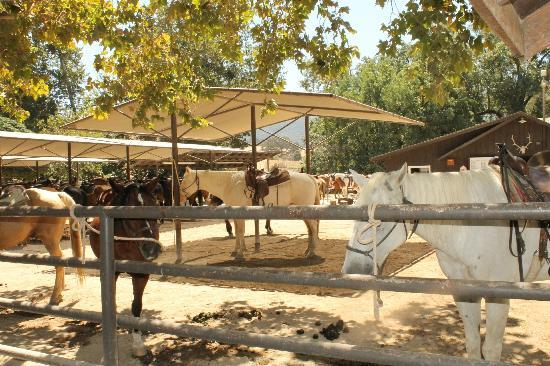 Alisal Guest Ranch & Resort: Horses!