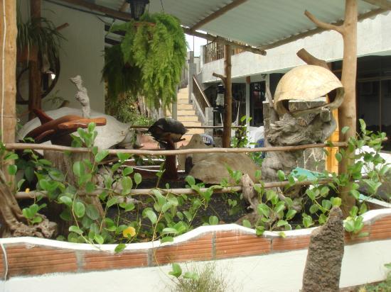 Hotel Fernandina: terrace