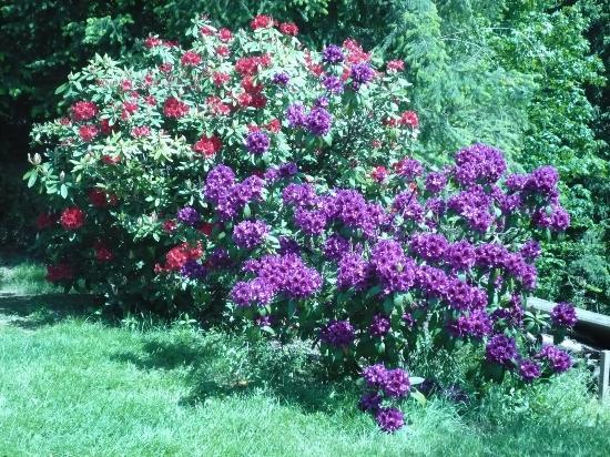 Foto Hulda Klager Lilac Gardens