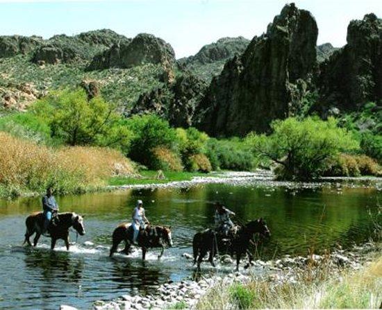 Saguaro Lake Ranch Stable Mesa Az Hours Address