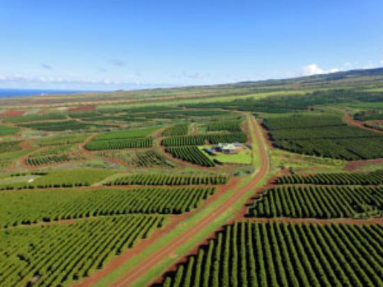 Kaanapali Coffee Farm Tour