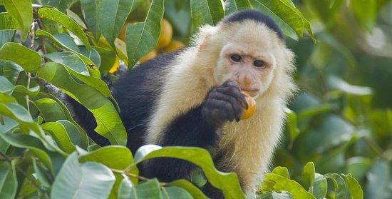 Gamboa Rainforest Resort Night Safari Foto