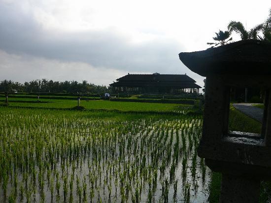 The Chedi Club Tanah Gajah, Ubud, Bali – a GHM hotel: Blick zum Restaurant
