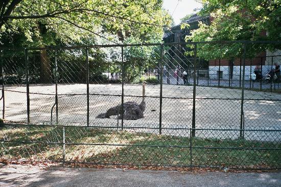Panther ennui picture of menagerie du jardin des plantes for Plantes du jardin