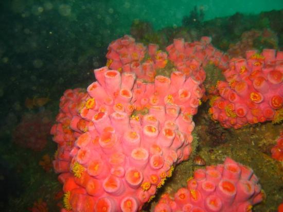 Unawatuna, Sri Lanka: Corals