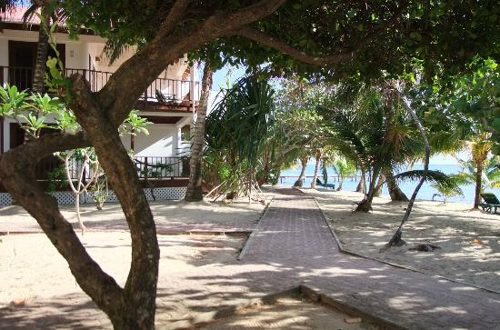 Robert's Grove Beach Resort : In the grove