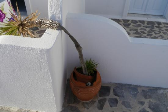 Caldera Villas: Liebevoll drapierte Palme