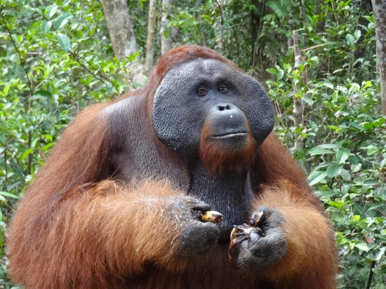 Rimba Orangutan Eco Lodge : A few miles from rimba lodge.