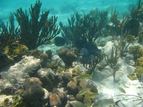 Key West Glass Bottom Boats