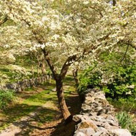 Foto de State Arboretum of Virginia