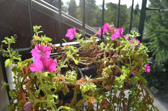 Cascina Cesarina B&B: Balcony flowers