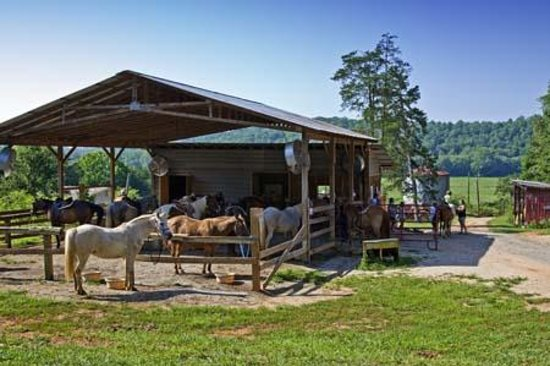 Chattahoochee Stables Photo