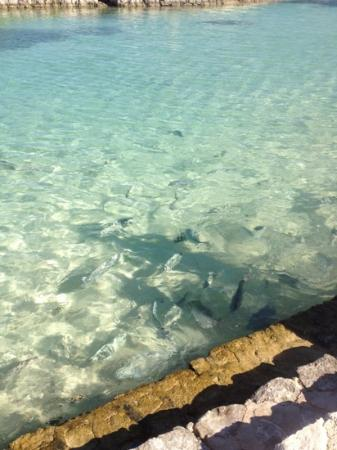 Heaven en Hard Rock Hotel Riviera Maya: swimming with the fish