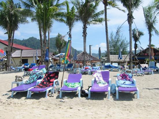 Coconut garden Photo