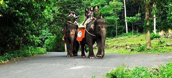 Prigen, Indonesien: Elephant Tracking (East Java Tourism, Indonesia)