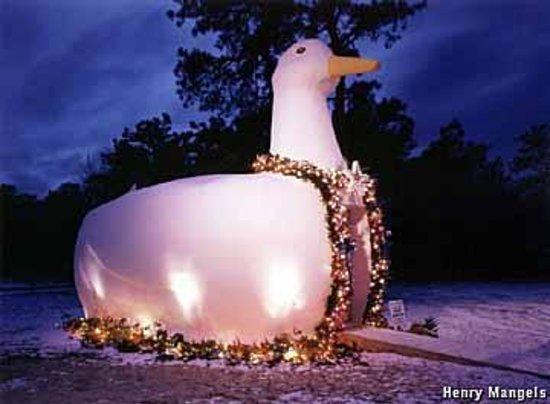 Flanders Long Island Duck