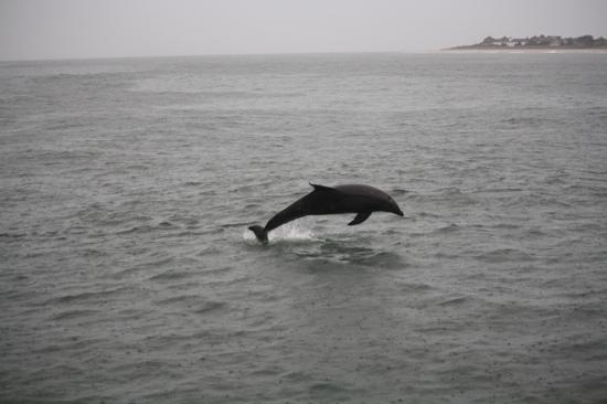 Cape May Whale Watcher: the only exciting thing on a 3 hour trip