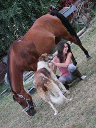 Equestrian Club Kentaur