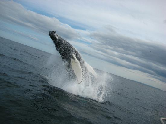 Northland Discovery Boat Tours: This pic was by far the highlight of our trip!