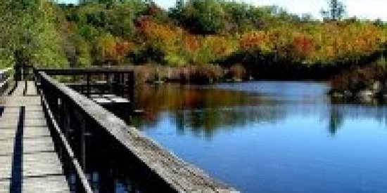 Shu Swamp Preserve - Charles T Church Nature Preserve