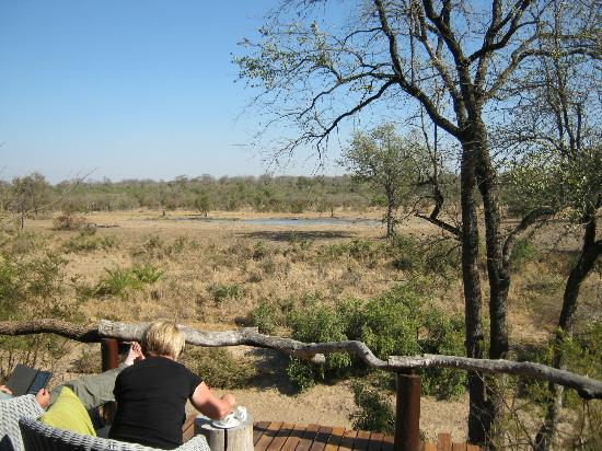 Simbambili Game Lodge: Water hole from deck of main lodge.