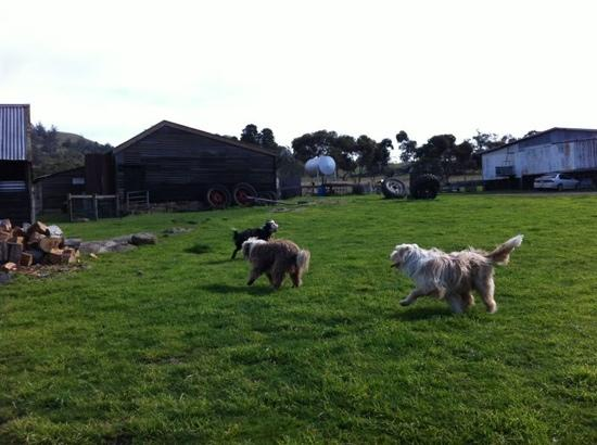 Daisy Bank Cottages: three gorgeous dogs