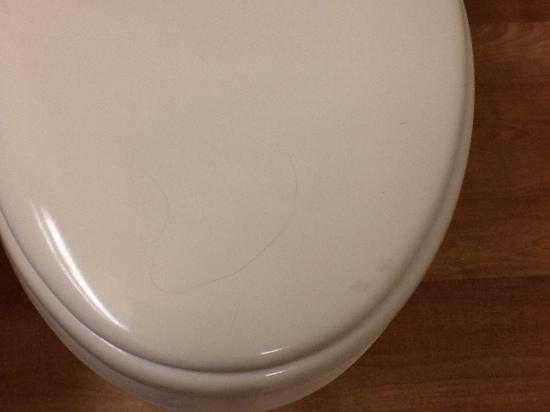 Extended Stay America - Philadelphia - Cherry Hill: Loose strand of hair on toilet seat.