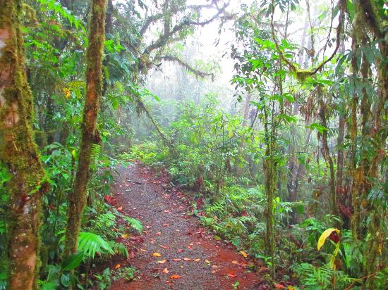 Villa Blanca Cloud Forest Hotel and Nature Reserve: Trail