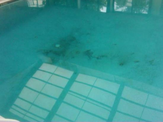 La Quinta Inn & Suites Fairfield: Black slime and green algae in pool. Told pool was cleaned that morning.
