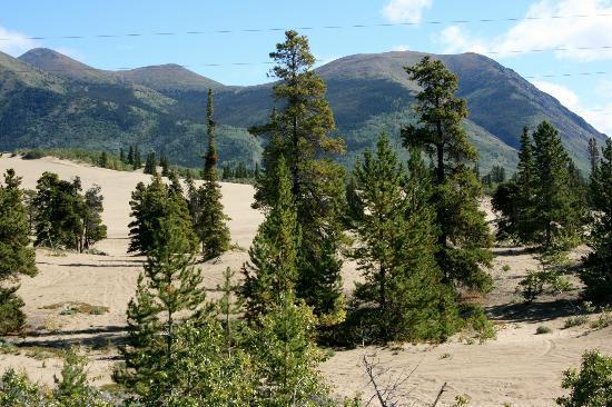 Carcross Desert: Carcross Deser, Yukon August 2012