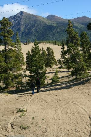 Carcross Desert: Carcross Deser, Yukon August 2012.  Worth a stop.  Really pretty and interesting.