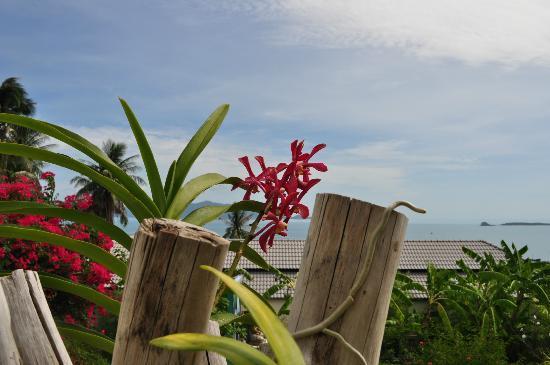 Pema Djougne : jardin