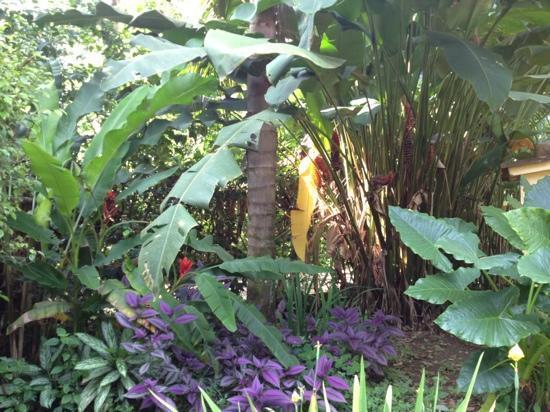 La Perla del Caribe: il giardino