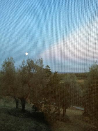Agriturismo le Caggiole: View from the room